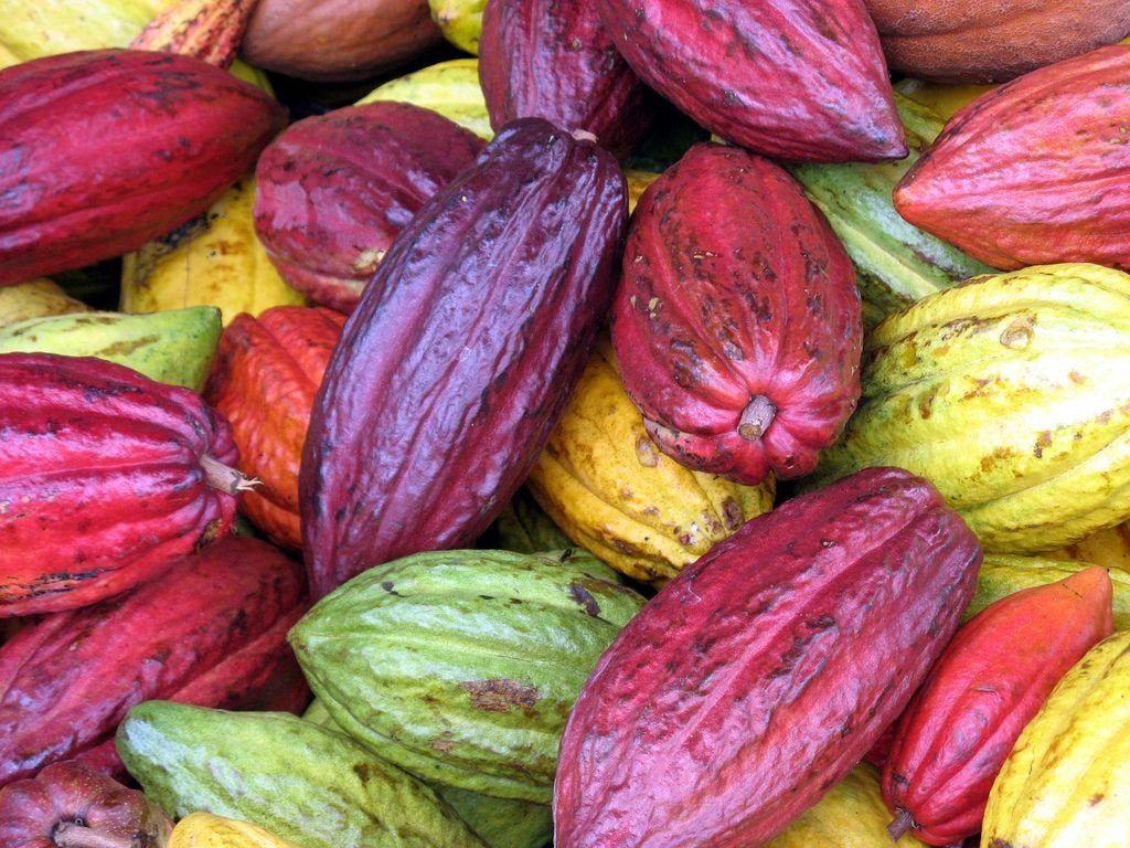 Chocolade op Oahu